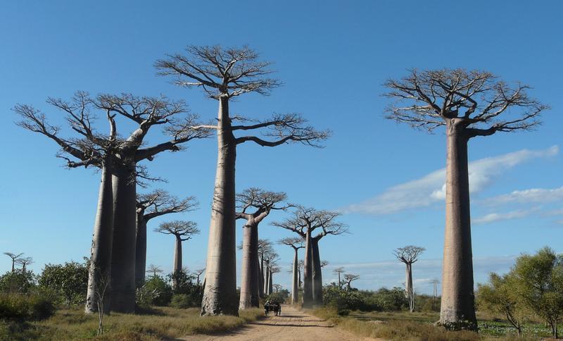You are currently viewing Secteur du tourisme à Madagascar : Les opérateurs réclament une réouverture progressive des frontières