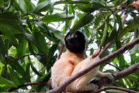 Le festival Indri Madagascar pour développer un tourisme communautaire durable