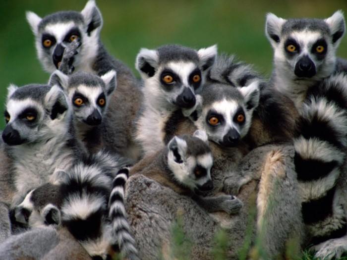 « National Geographic Expeditions » : Cinq voyages organisés à Madagascar cette année
