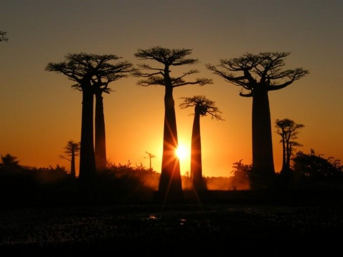 Madagascar. Lancement  officiel de l'utilisation des outils d'apprentissage en matière d'éducation environnementale