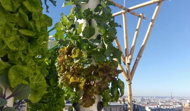 accorhotels cultive ses fruits et l u00e9gumes sur le toit de