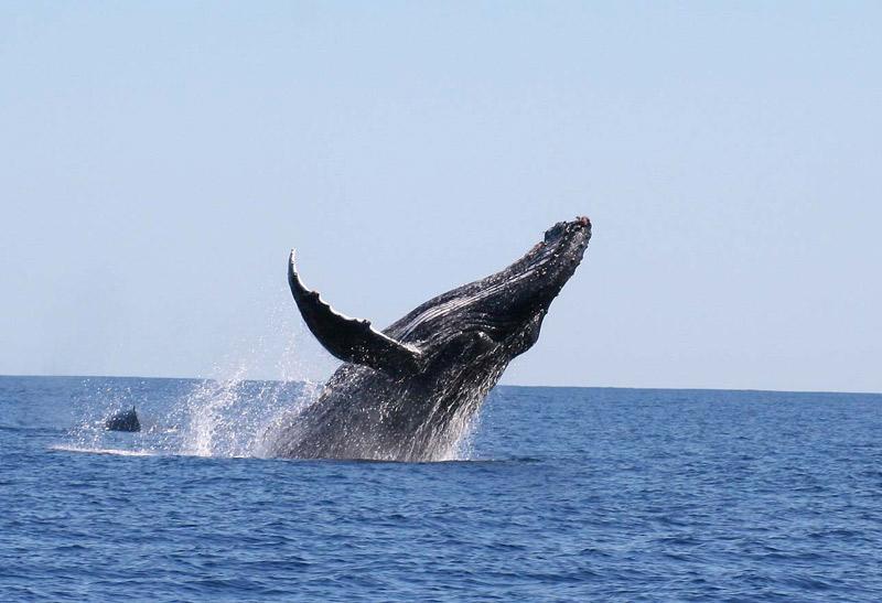 Taolagnaro – Vers la promotion du tourisme baleinier