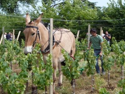 Des vins bio en accord avec le développement durable