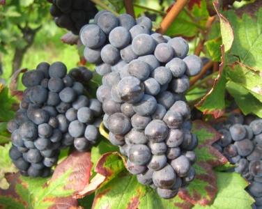 Les vins 'bio' ont la cote, malgré un manque de lisibilité des labels