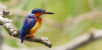 Eco-tourisme et Ornithologie : Succès du 3e Safari des oiseaux à Majunga