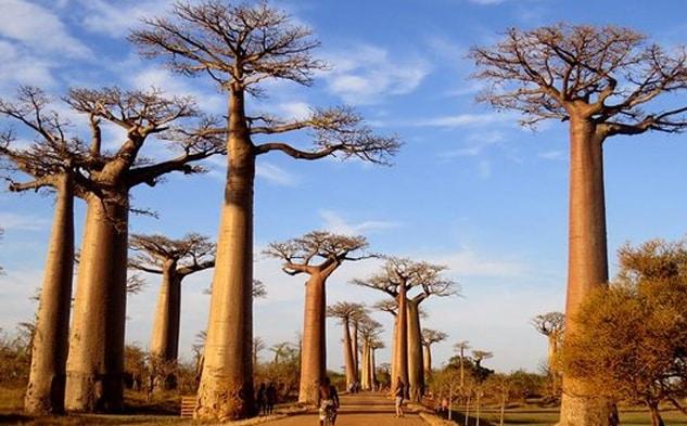 Madagascar lance son premier e-learning pour les agents de voyages