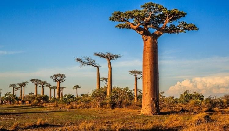 Madagascar. Relance du tourisme : Le protocole sanitaire en cours de validation