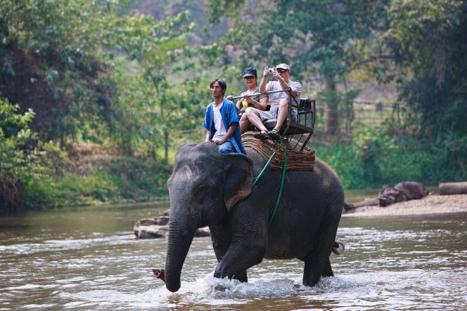 Souffrance animale : les dérives du tourisme