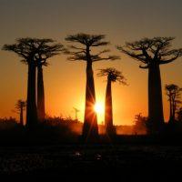 Madagascar-la-promotion-de-la-destination-en-Afrique-du-Sud-700x525